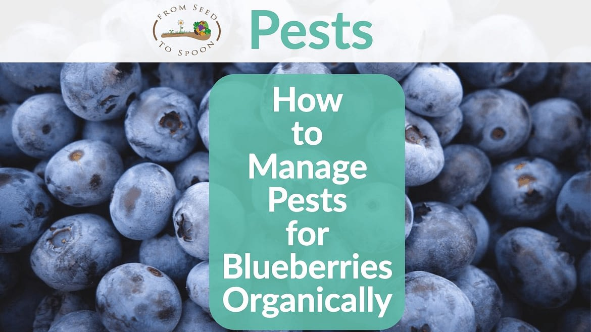 Growing Blueberries Using Neem Oil and Growing Other Plants Organically
